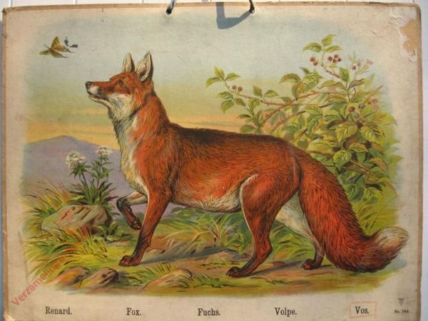 744 - Renard, Fox, Fuchs, Volpe, Vos